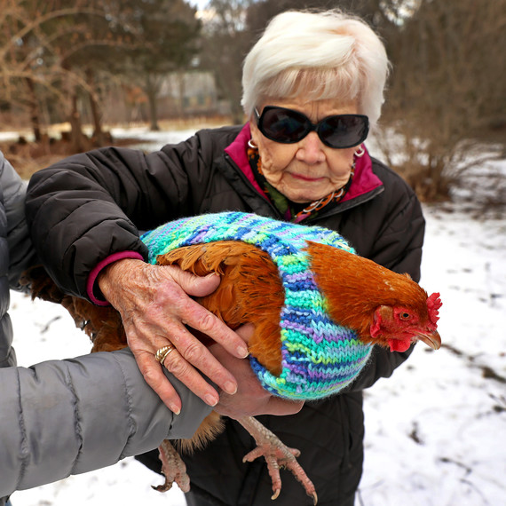 volunteer with chicken in knit sweater