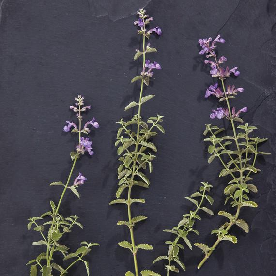 nash-garden-glossary-ld108835-0140.jpg