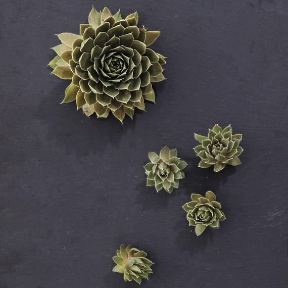 nash-garden-glossary-ld108835-0176.jpg