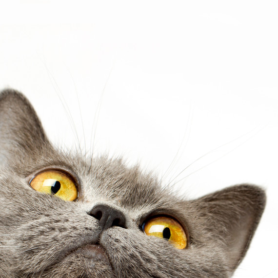 The 4 Things About Cat Behavior That You Should Know