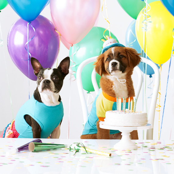 mspets-birthdayparty-dogs-mrkt-0520.jpg