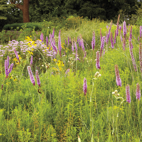 nybg-native-plant-meadow-061-d111464.jpg