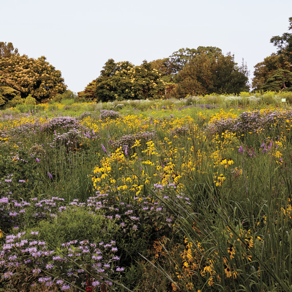 nybg-native-plant-meadow-085-d111464.jpg