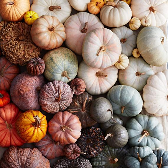 Batch of pumpkins.