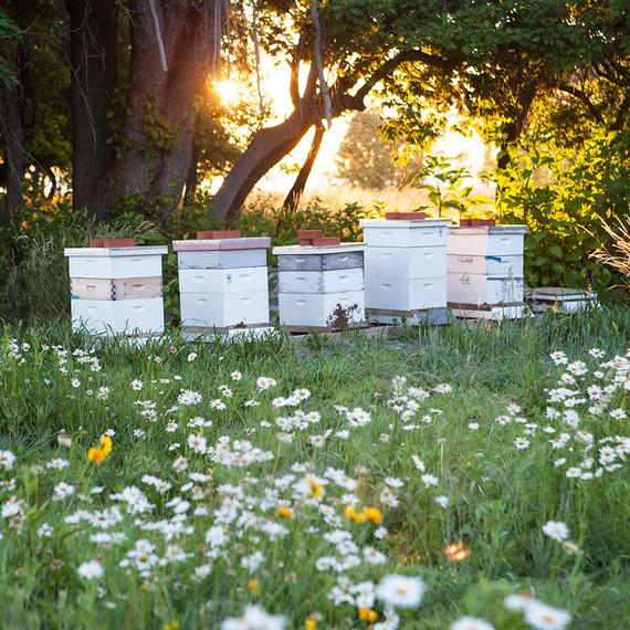 beekeeping-lessons-waxing-kara-03-0723.jpg