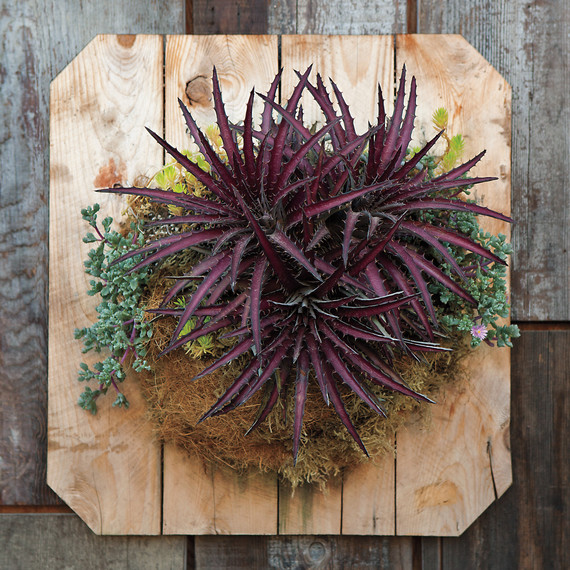 flora-grubb-2063-american-made-md109210.jpg