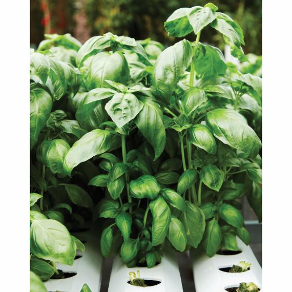 gotham-greens-growing-713r-d112691-0416.jpg