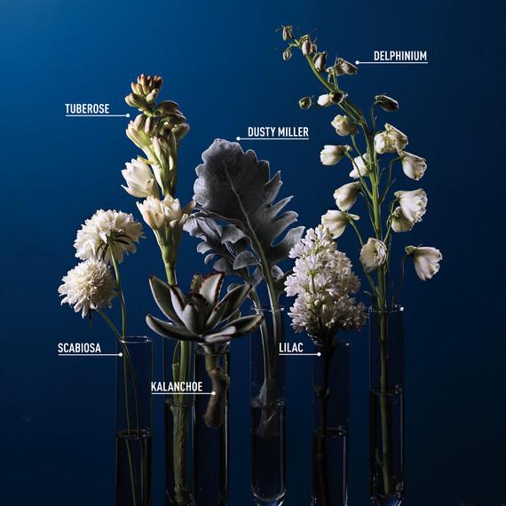 opener-flowers-labeled-107-d111890-0415.jpg