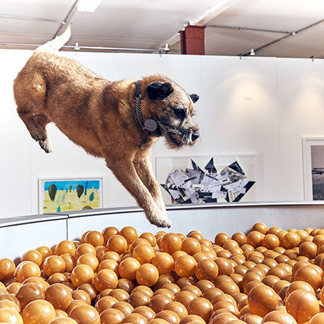 The world's first art exhibit for dogs was created by Dominic Wilcox.
