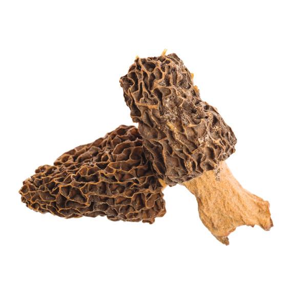mushrooms-s111153-istock-000008158102-medium.jpg