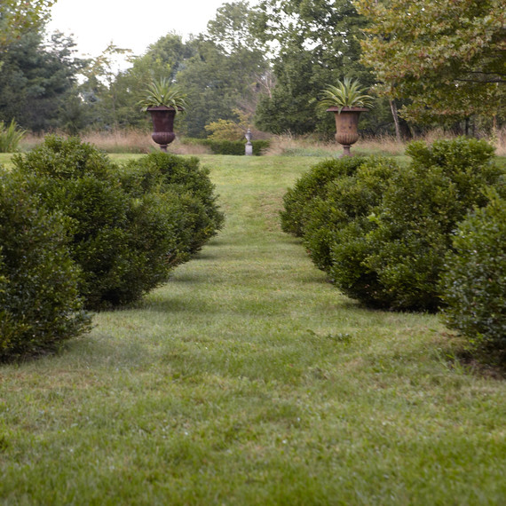 garden-filippone-boxwood082613-msl-d110553-01.jpg