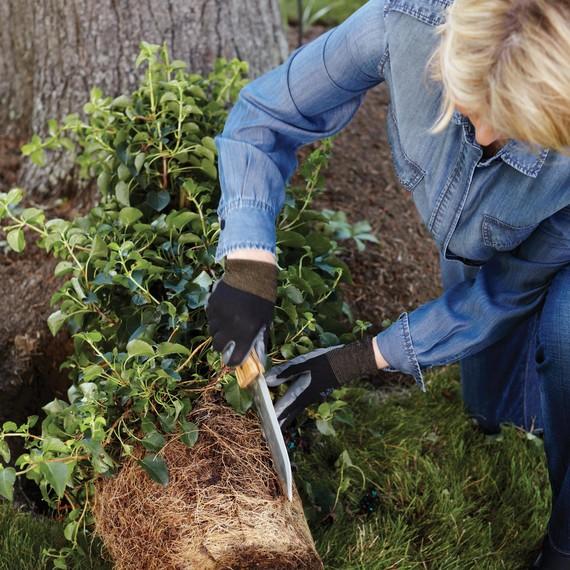 martha-planting-climbing-hydrangea-027-d112299.jpg