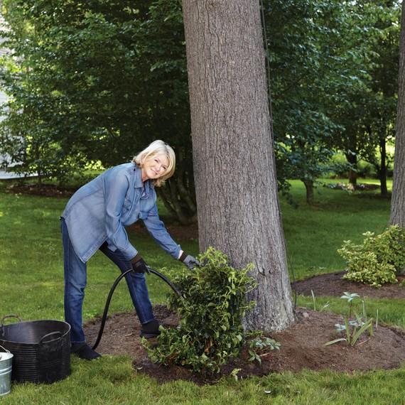 martha-planting-climbing-hydrangea-104-d112299.jpg