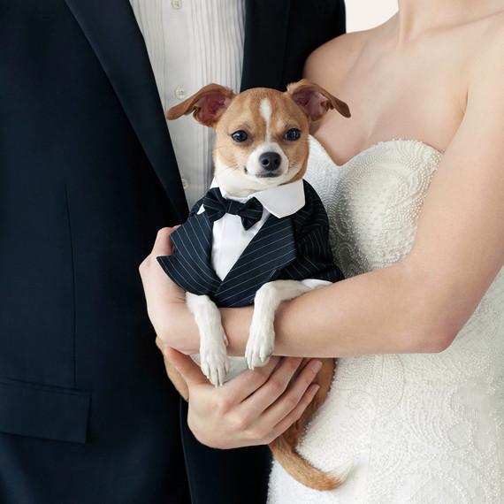wedding-pet-clothes-dog-couple-096-d111997-0515.jpg