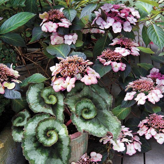 heckler-hydrangea-garden-522445aj-dsc8119-s111010.jpg