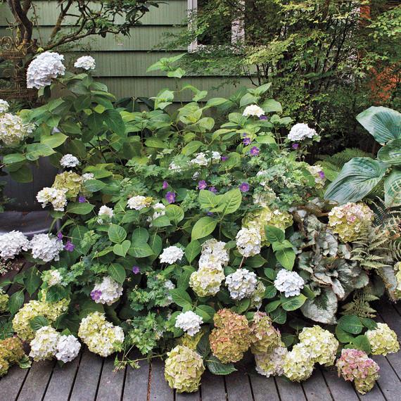 heckler-hydrangea-garden-522458aj-dsc8132-s111010.jpg