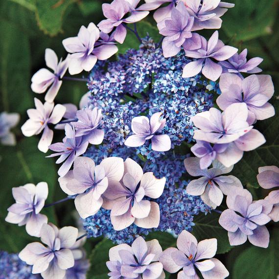 heckler-hydrangea-garden-522467aj-dsc8141-s111010.jpg