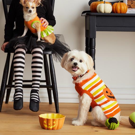 mspets-dog-halloween-pumpkinsweater-d112236-mrkt-0915.jpg