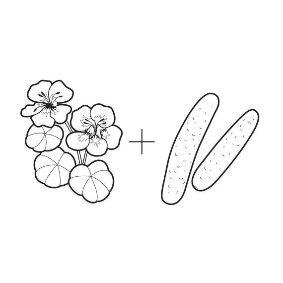 ask-martha-nasturtiums-and-cucumbers-illustration-0314.jpg