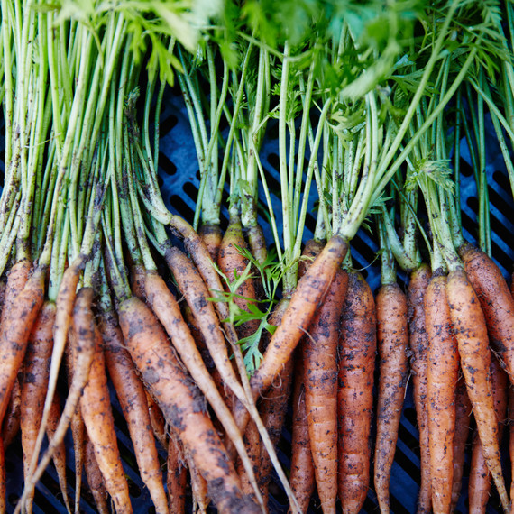 thanksgiving-anne-quatrano-carrots-19-can-7004-d110790.jpg