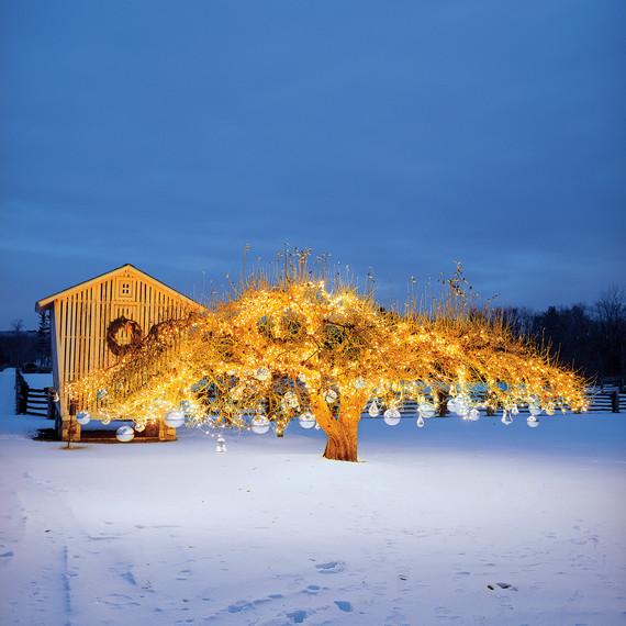 outdoor-christmas-tree-bulbs-139-stew-9780307396464-art-r1.jpg