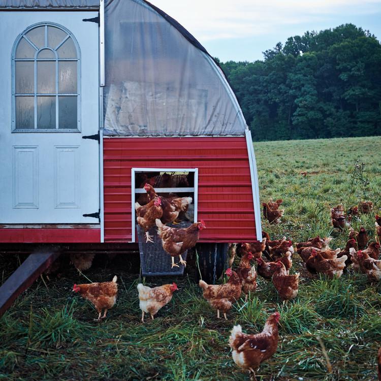 wyebrook-farm-early-morning-01-136-d111590.jpg