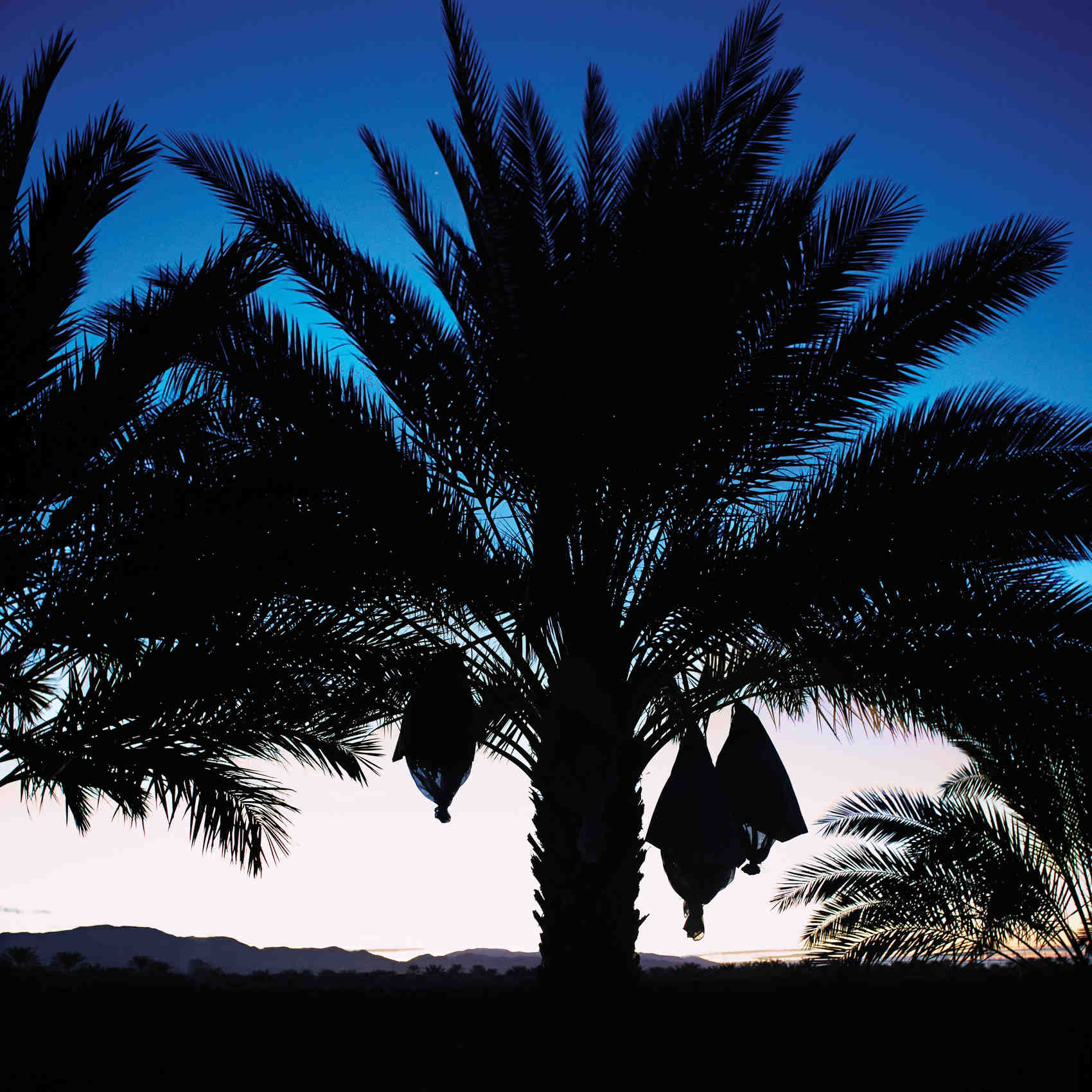California, A Desert Oasis, Lots of Sunshine ... and Great Dates