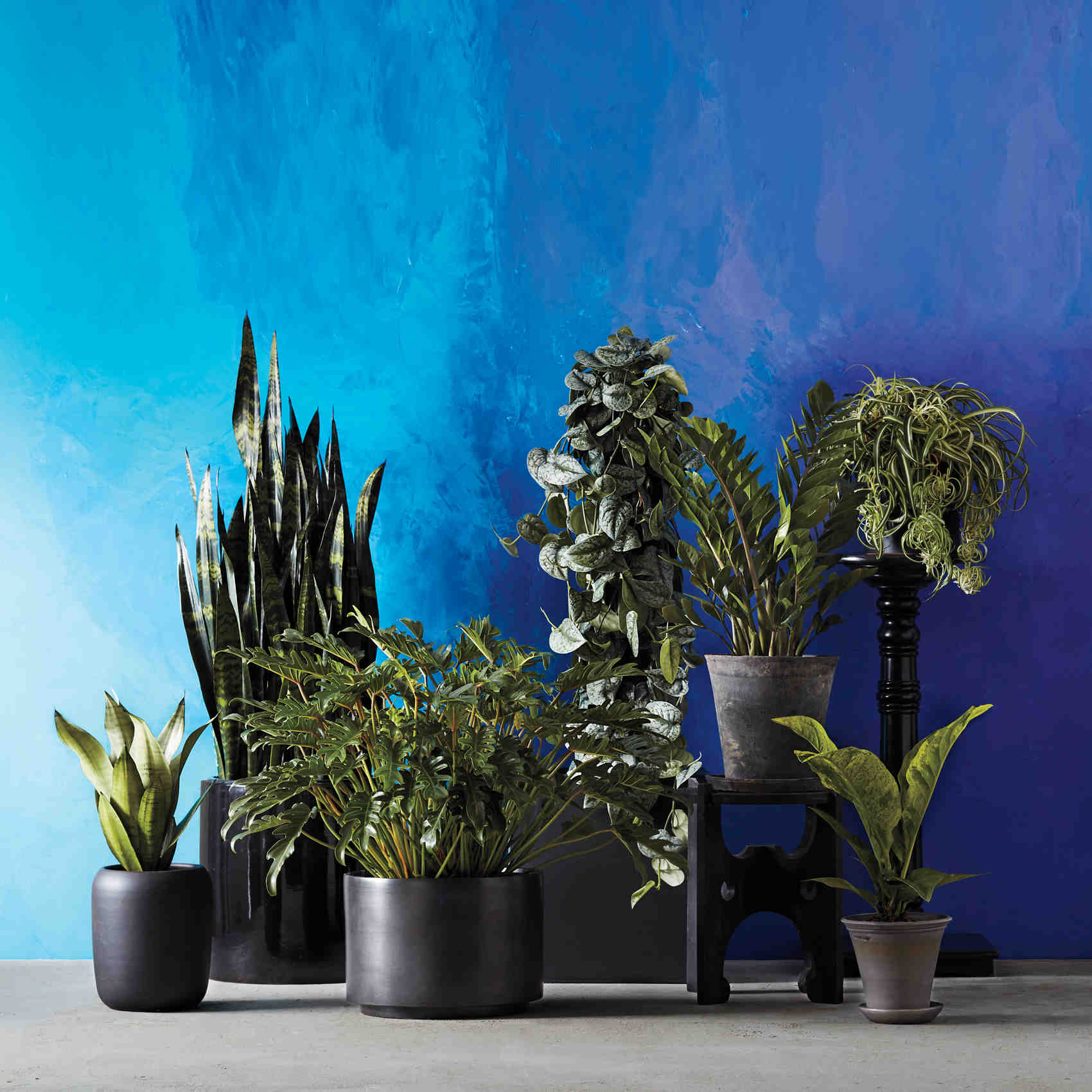 Grow light for houseplants -  Grow Gorgeous Houseplants In Any Kind Of Light