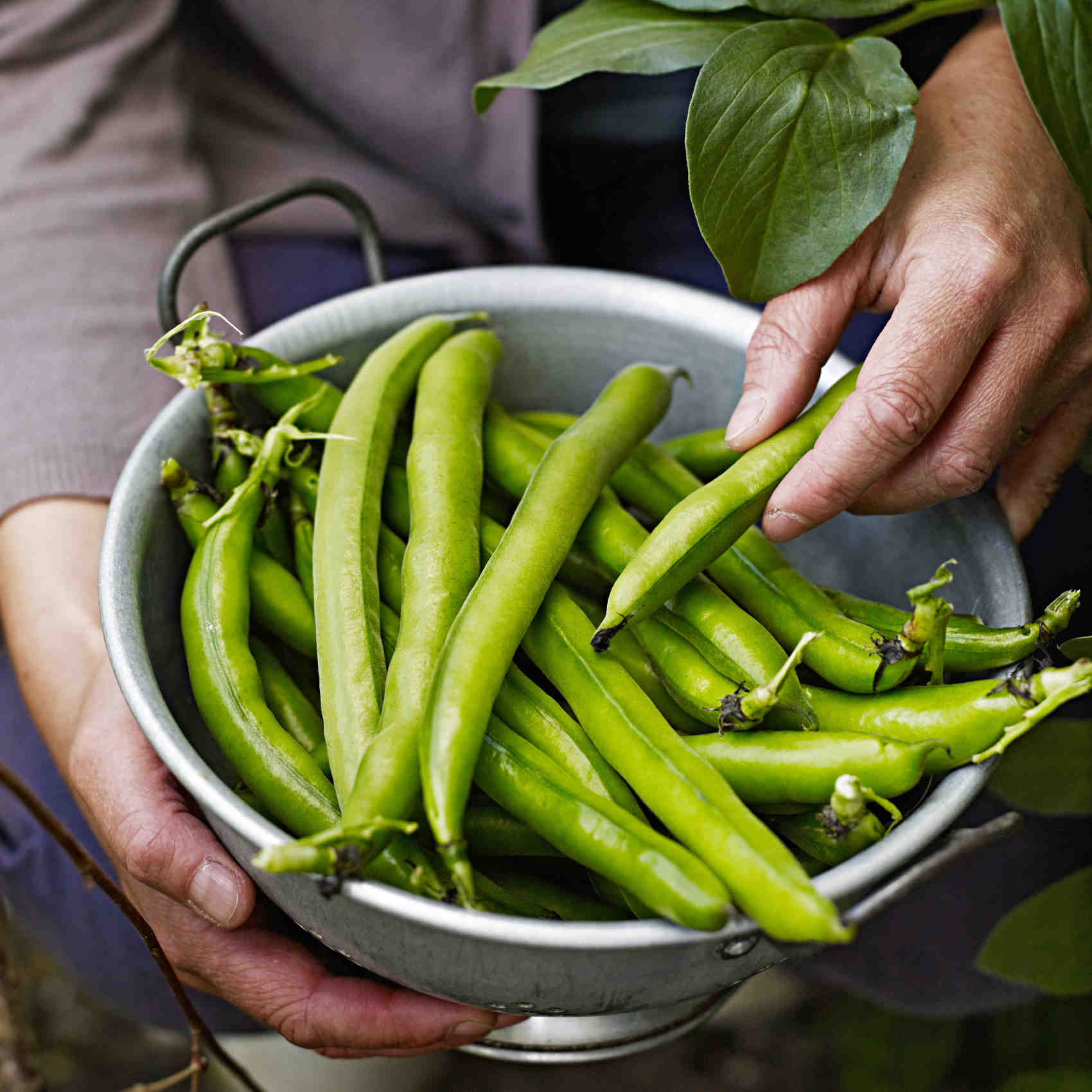 picked green beans