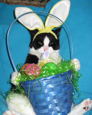 Peanut loves his Easter basket full of goodies!