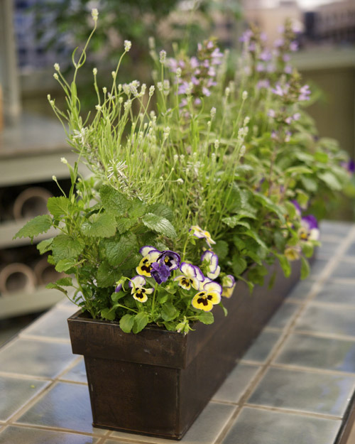 Edible Garden Martha Stewart