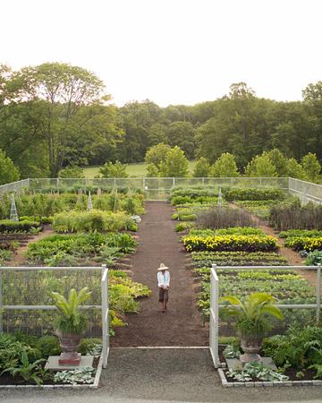 Amazing Vegetable Gardens