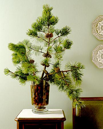 Winter Still Life With Pinecones Martha Stewart