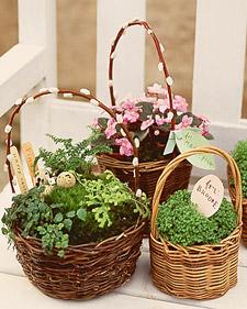la_0400_planted_basket.jpg