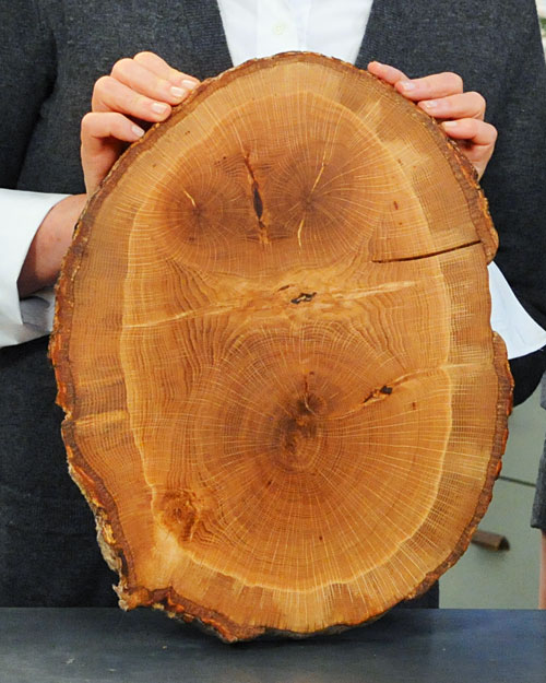 Fallen Tree Cutting Boards Step By Step Diy Craft How