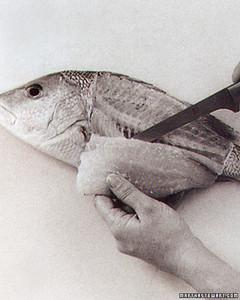 ft_cookfish14.jpg