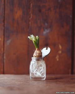 ft_hyacinths04.jpg