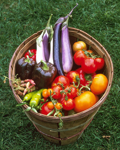 Vegetable Garden 101 Martha Stewart