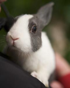 m4126_bunnies60.jpg