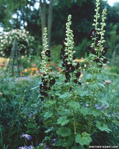 ft077_planting15.jpg