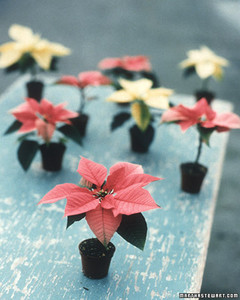 ft_poinsettias02.jpg