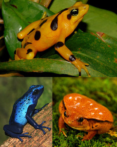 4015_100608_frogs.jpg