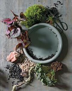 How To Make A Dish Garden