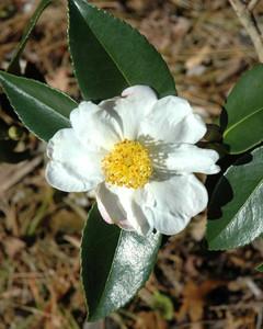 5092_020310_flower.jpg