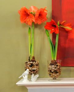 3 Ways To Plant Amaryllis