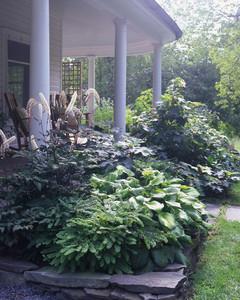 Garden Tour: Foundational Makeover