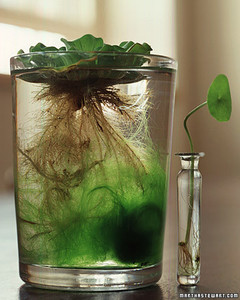 Indoor Water Gardens Indoor water gardens martha stewart a985760901ontableg workwithnaturefo