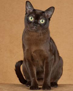 cat-breeds-ii24-666.jpg