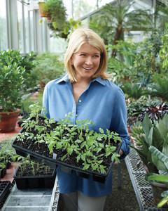 gardening-mld108042.jpg
