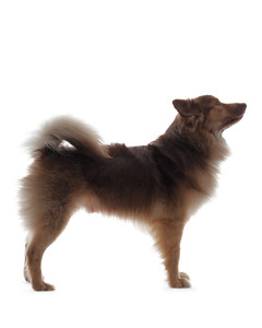 dog-profile-ms108506.jpg